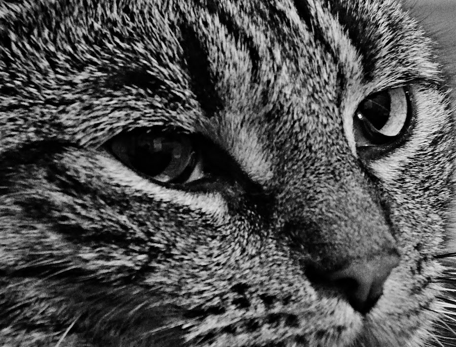 by Christine Godard - Novices Only Pets ( breed, wild, cat, b&w, black and white, people, portrait, photography, city, strange, pet, dog, weird, animal, Dogs, Cats, Pets, Rabbits, Animals, livestock, cows,  )