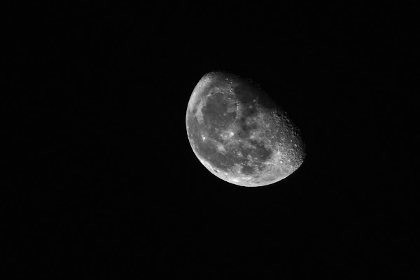Luna di alessio capirchio