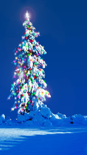 Christmas Trees Wallpapers