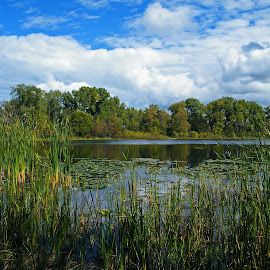 Tranquil Marsh by Bill Diller - Landscapes Waterscapes ( calm, grasses, green, michigan, nature, calmness, tranquility, state recreation area, clouds, state park, water, marsh )