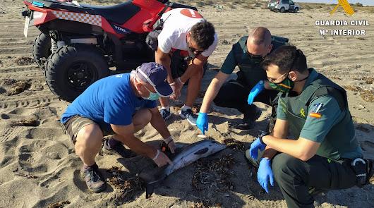 Rescatan a un delfín varado en la playa de Almerimar