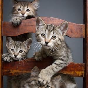 -jessica kittens1194 no data.jpg