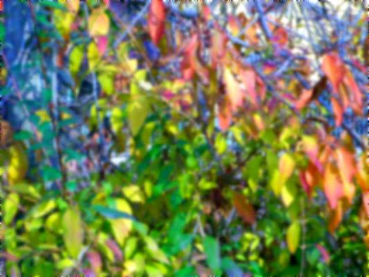 Impressioni d'autunno di lollo