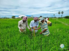 Photo: CFPAR for Kampong Speu province farmers , Lvea Village, Ang Popel commune, Korng Pisey district, Kampong speu province (10-12 Sep 2014)