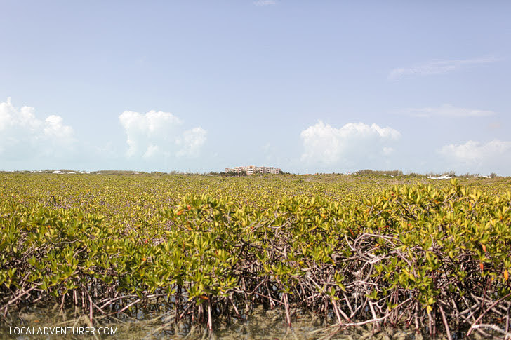The Mangroves Eco Tour with Big Blue Unlimited (Turks and Caicos Things to Do).