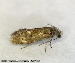 Photo: 0006 Eriocrania subpurpurella