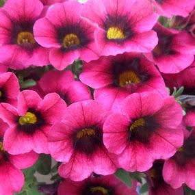 by Allmen Quester - Flowers Flower Arangements