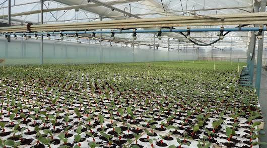 El proyecto trata de mejorar los rendimientos en la producción ecológica