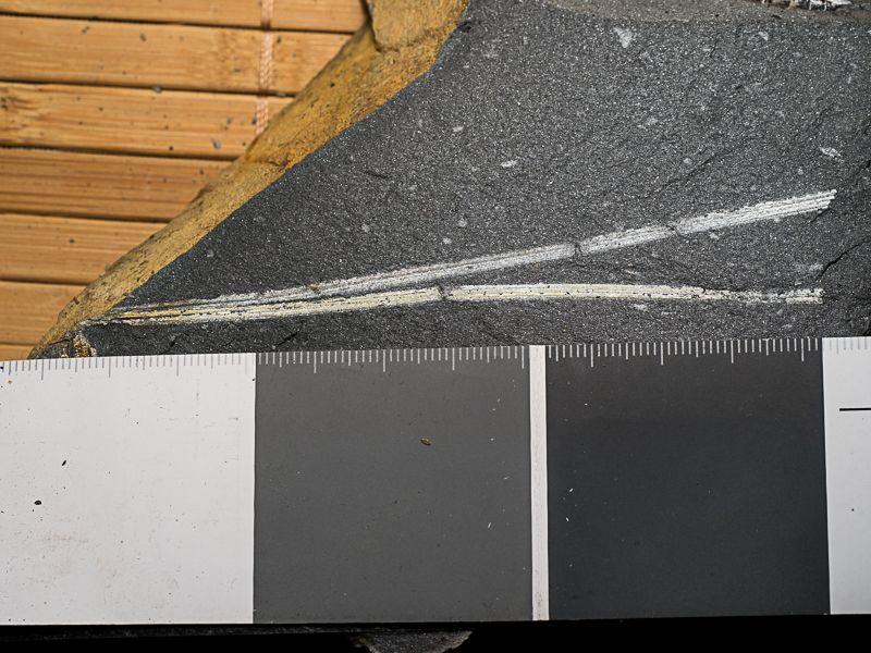 Flore Carbonifère des Alpes Françaises part 1 - Page 5 Seh_5vM95gLGL-EfIn7LnAMrREoTLQ9La_Rd4J9BquKuh4aL3Q7LxjufHesSR1WrXslXdjeRNdF3nw=w1920-h1080-no