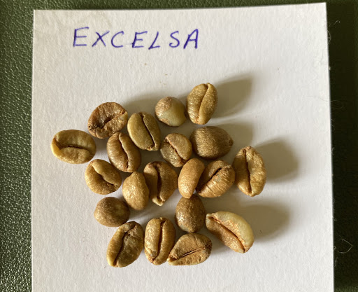 What is excelsa coffee?