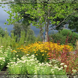 Here Comes The Storm by Janet Young- Abeyta - Nature Up Close Other plants