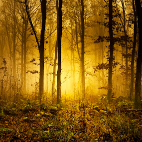 Mystic Forest by Björn Olsson - Nature Up Close Trees & Bushes ( sweden, tree, forest, light, mist )