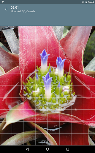 Jigsaw Puzzle: Flowers screenshot 20