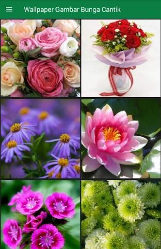 Download Wallpaper Gambar Bunga Cantik For Pc
