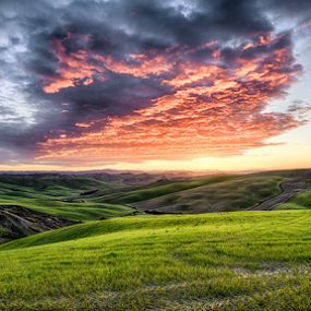 Sunset in Tuscany by Maurizio Martini - Landscapes Sunsets & Sunrises ( countryside, hills, tuscany, seasonal, italian, silhouette, yellow, travel, sky, nature, tree, autumn, light, hill, orange, grass, agriculture, horizon, forest, sunlight, rural, country, environment, season, scene, view, plant, beauty, landscape, sun, panorama, farm, hillside, evening, italy, clouds, green, beautiful, scenic, field, fog, sunset, peace, outdoor, background, fall, meadow, summer, sunrise, scenery,  )