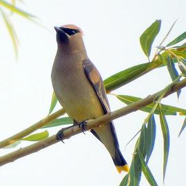 BIRD ROBBER! by Cynthia Dodd - Novices Only Wildlife ( bird, nature, wildlife, feathers, animal )