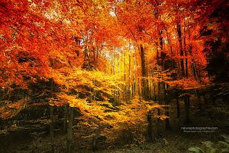 Photo: Colour Combination