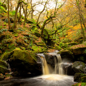 Padley Gorge moss 1 by Ray Heath - Landscapes Forests ( colour, time, 1 seasons, autumn, locations, padley gorge, image, streams, type, derbyshire,  )