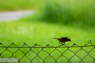 Photo: Walking on the fence