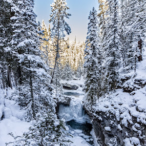 Icy Canyon by Anatoliy Kosterev - Landscapes Forests ( winter, ice, snow, trees, forest )