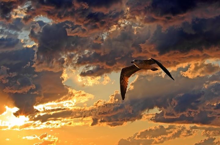 Volo solitario di Damiano