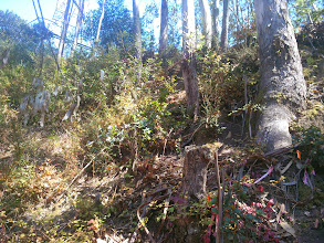 Photo: The native trees are there already. Eradicate the eucalypti and vegetation management becomes much easier.