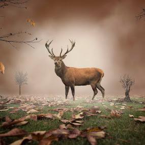 Autumn by Frank Quax - Digital Art Animals ( autumn, editing, manipulation, deer, photoshop )