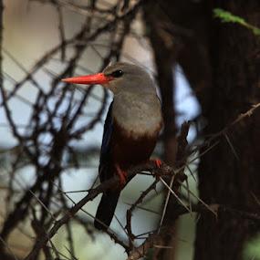 by Kedar Banerjee - Novices Only Wildlife