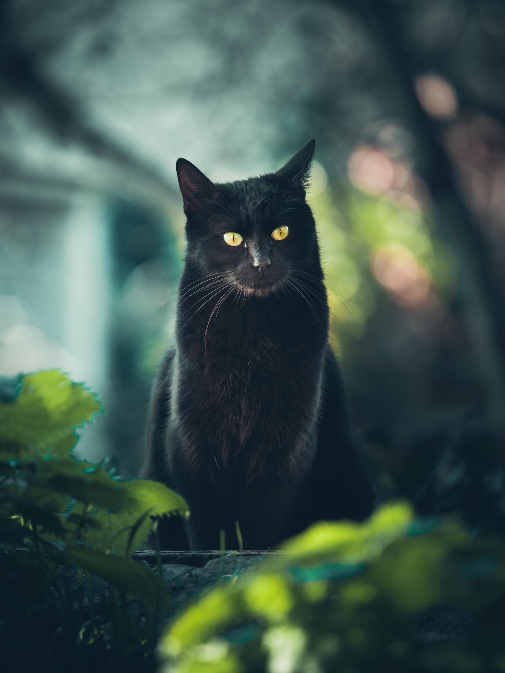 il gatto nero di maxlazzi