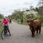 Велокруиз по Голландии, май 2017