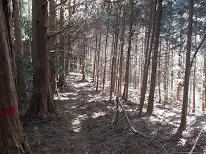 林道と平行に進む