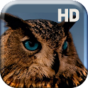 Amazing Owl Live Wallpaper icon