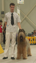 Photo: Middle European Show Bratislava/SK Ex1st, CAC in working class Ch. Xeros Kasiterit Ex1, CAC, CACIB & BEST OF BREED  with Ch. Keysybrie Bellinda Saturday, August 21, 2004
