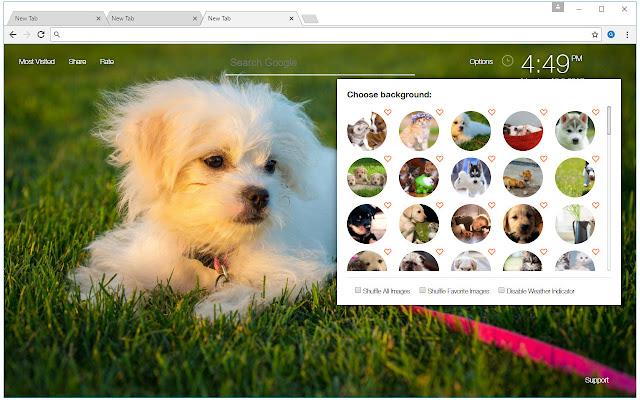 Kitten Vs Puppy - Kittens & Puppies New Tab