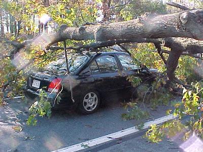 Some bastard tree smooshing my car.