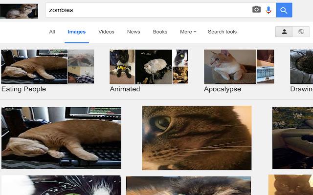 CatFestation