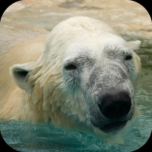 益智App|野生動物ゲーム:子供のための LOGO-3C達人阿輝的APP