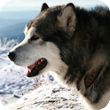 Malamute Dog Pack 3 Wallpaper icon