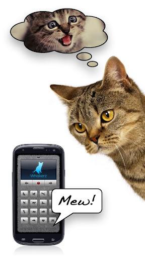 貓叫 - 和貓一起玩!