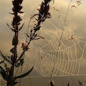 web by Jana Černošková - Nature Up Close Webs ( web,  )