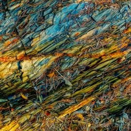 Rocks and pine needles by Roberto Sorin - Nature Up Close Rock & Stone ( plant, old, surface, colorful, ground, stone, rock, needles, leaf, yellow, landscape, leaves, creativity, multi colored, close, backdrop, sisters, macro, nature, color image, tree, autumn, vibrant color, pine, abstract, chaos, green, texture, colors, art, wallpaper, forest, woods, close-up, material, korean, red, pattern, season, color, blue, textured, fall, background, outdoor, summer, brown, day, natural, design,  )