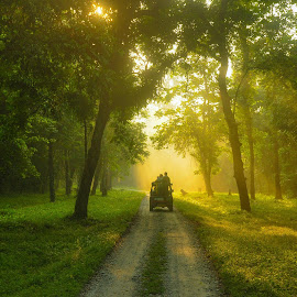 by Sambit Bandyopadhyay - Landscapes Forests (  )