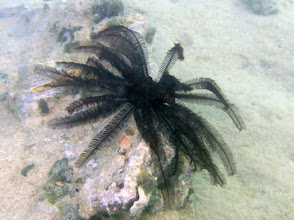 Photo: Feather Star