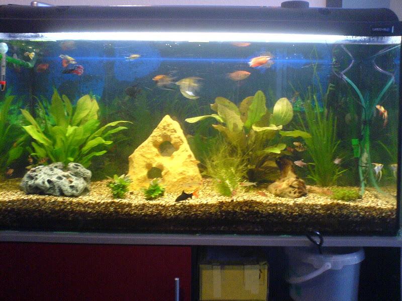 aquarium einrichten lassen f r wiviel aquarium forum. Black Bedroom Furniture Sets. Home Design Ideas