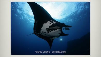 Photo: Giant manta rays: Revillagigedos, Mexico