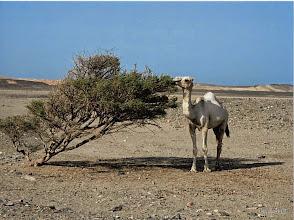 Photo: Chiara Malengo - Vita nel deserto