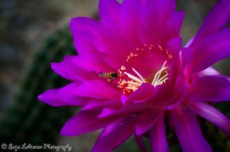 Photo: Going to say good night & wish all a fantastic new week :)!  saija-lehtonen.artistwebsites.com  #cactusflower  #cactus  #flowers  #flowerphotography  #flowerpower  #flowerscolor  #flowersphotos  #floraltoday  #floralphotos  #floralphotography  #nature
