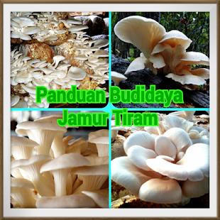 Panduan Budidaya Jamur Tiram screenshot