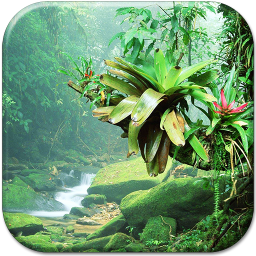 Jungle Live Wallpaper Icon