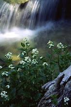 Photo: Hendrys Creek, Mount Moriah Wilderness, Snake Range, Nevada